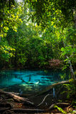 Emerald Pool at Krabi in Thailand Royalty Free Stock Image