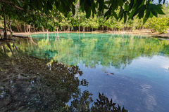 Emerald pool at Krabi Thailand Royalty Free Stock Photography