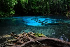 Emerald Pool. Krabi, Thailand Stock Photo