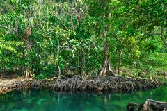 Emerald Pool and Mangrove Forest Pa Phru Tha Pom Khlong Song Nam in Krabi Province, Thailand.  Stock Photo