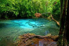 Emerald pool 6. This is spring of Emerald Pool. This hot spring originates from a warm stream in the lowland forest of Khao Nor Juji which is supposedly Thailand stock image