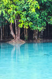 Emerald Pool (Sra Morakot) Krabi province , Thailand. Royalty Free Stock Photo