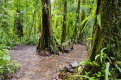 Emerald Pool Trail Photo libre de droits
