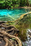 Emerald pool and tree root Stock Image