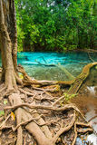 Emerald pool Stock Photography