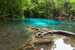Emerald Pool is unseen pool in mangrove forest Stock Photos