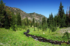 Emerald Stream. In Montana on a beautiful summer's day Royalty Free Stock Photography