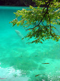 Emerald water. A close up of emerald water lake in Plitvice national park Royalty Free Stock Images