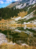 Emerald water. Firs reflected in mountain lake. Royalty Free Stock Image
