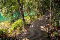 Emerald Water und Dschungel-Weg lizenzfreies stockbild