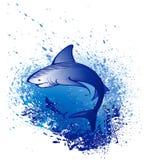 Emerge lo squalo bianco Fotografia Stock Libera da Diritti