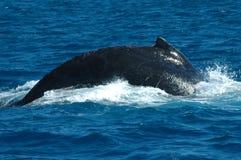 Emergencia de la ballena Fotografía de archivo libre de regalías