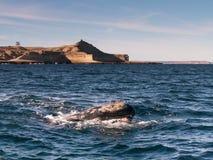 Emergencia de la ballena derecha Imagen de archivo libre de regalías
