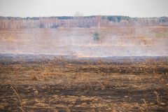 Emergency in a field, fire burns dry grass with animals royalty free stock photo