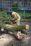 Emergency workers are clearing the streets from the collapsed the old tree after a storm Stock Image