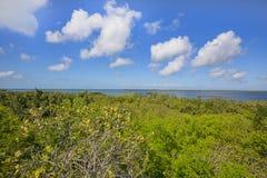 Emerson Point Preserve High View av horisonten över golfen av Mexico royaltyfria bilder