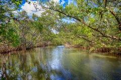 Emerson Point Preserve Wetlands i palmettoen, Florida arkivfoton