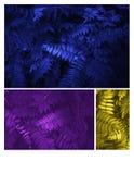 Emettendo luce foglie blu, gialle e porpora modelli bello tropicale fotografie stock libere da diritti