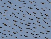Emigração das cegonhas fotos de stock
