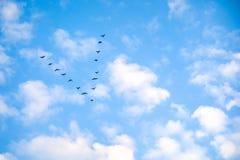 Emigracyjne gąski przeciw niebu, Sezonowa migracja ptaki obrazy stock