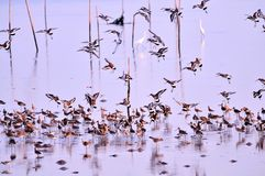 Emigration of bird from bangpu. Shoot From Bangpu Recreation Center royalty free stock photos