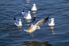 Emigration of bird,. Shoot from bangpu stock photo