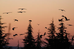 Emigration of stork. Mass emigration of stork at spring royalty free stock photography