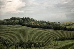 Emilia Romagna-Rebhügel Stockbilder