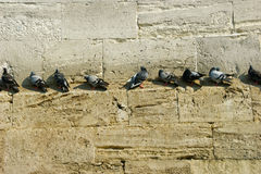 Eminonu Doves. Doves on the stairs and walls of eminonu mosque in istanbul Royalty Free Stock Image