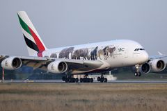 Emirates A380 `United for Wildlife` Livery plane takes off from AMS Airport, Netherlands. Emirates `United for Wildlife` Livery jumbo plane takes off from royalty free stock image