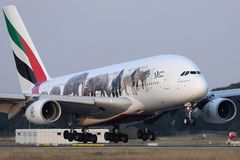 Emirates A380 `United for Wildlife` Livery plane takes off from AMS Airport, Netherlands. Emirates `United for Wildlife` Livery jumbo plane takes off from royalty free stock photos