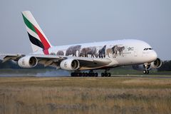 Emirates A380 `United for Wildlife` Livery plane takes off from AMS Airport, Netherlands. Emirates `United for Wildlife` Livery jumbo plane takes off from royalty free stock photography