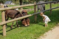 Emma e os poneys Foto de Stock