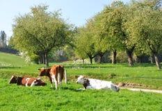 Emmental region, Switzerland Royalty Free Stock Photo