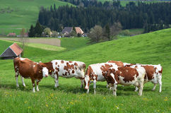 Emmental region, Switzerland Royalty Free Stock Photography