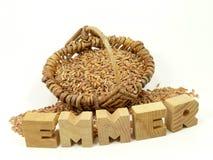 Emmer ur-grain on white Stock Images
