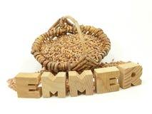 Emmer ur-grain on white Stock Photos