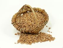 Emmer ur-grain on white Stock Photo