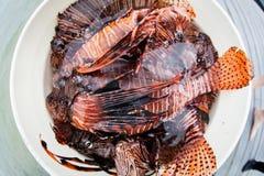 Emmer van Dode Lionfish in de Caraïben stock fotografie