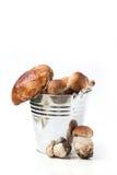 Emmer van eekhoorntjesbroodpaddestoelen Stock Afbeeldingen