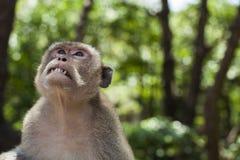 Emoção do macaco imagens de stock