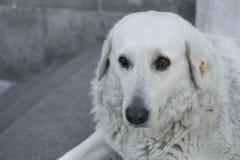 Emocional-mirada del perro Foto de archivo libre de regalías