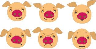 Emocjonalna świnia zdjęcia stock
