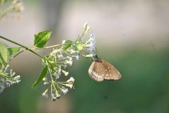 Emocjonalny Butterfiles zdjęcie royalty free