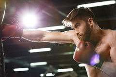 Emocjonalny skoncentrowany młody silny sporta mężczyzna bokser fotografia stock
