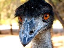 Emoe stock foto's