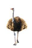 Emoe royalty-vrije stock fotografie