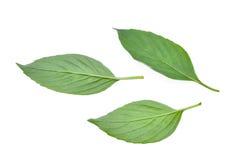 Emon of harig basilicum groen die blad op wit wordt geïsoleerd stock afbeeldingen