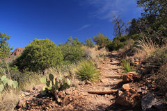 Emory Peak Trail Stock Foto's