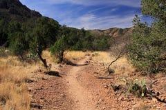 Emory Peak Trail Stock Foto